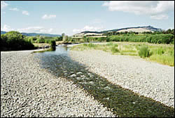 Low flow in the Motueka River in summer