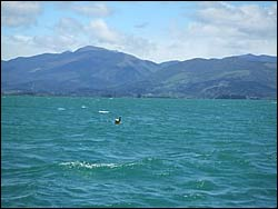 Monitoring buoy off the Motueka River mouth