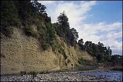 Bank erosion - Motupiko River