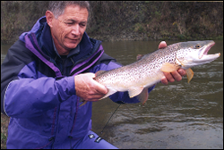 Radio tagging trout (Courtesy of Nelson Evening Mail)