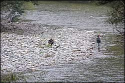 Anglers in the Motueka River
