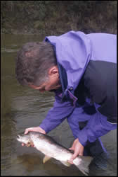 Radio tagging trout